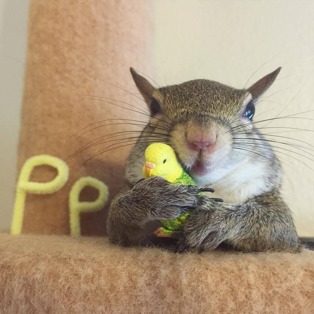 【かわいい動物】保護されたリスちゃんの画像が最高に萌える。【英語ではSquirrel】.jpg