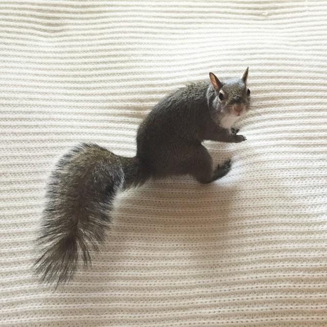 【かわいい動物】保護されたリスちゃんの画像が最高に萌える。【英語ではSquirrel】19.jpg