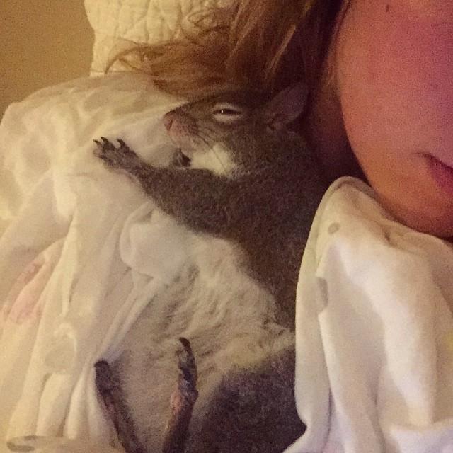 【かわいい動物】保護されたリスちゃんの画像が最高に萌える。【英語ではSquirrel】4.jpg