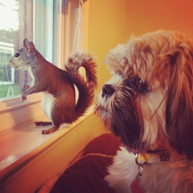 【かわいい動物】保護されたリスちゃんの画像が最高に萌える。【英語ではSquirrel】6.jpg