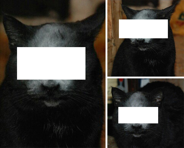 【デビルキャット】黒猫&小麦粉=デビルになる事が判明。【画像】.jpg