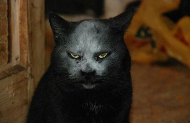 【デビルキャット】黒猫&小麦粉=デビルになる事が判明。【画像】2.jpg