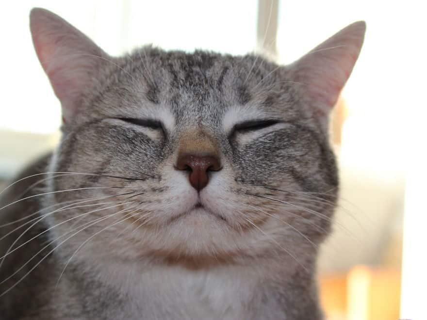 Happy-Cats__880.jpg