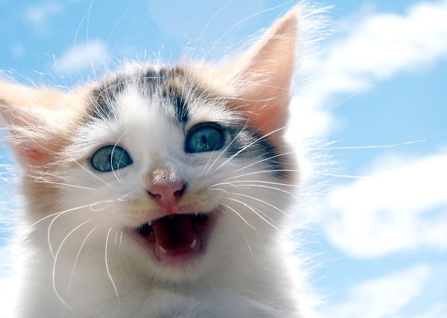 happy-cat-smiling-1__880.jpg