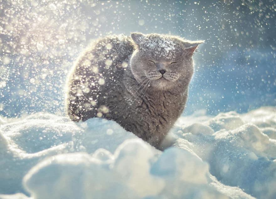 happy-cat-smiling-3__880.jpg