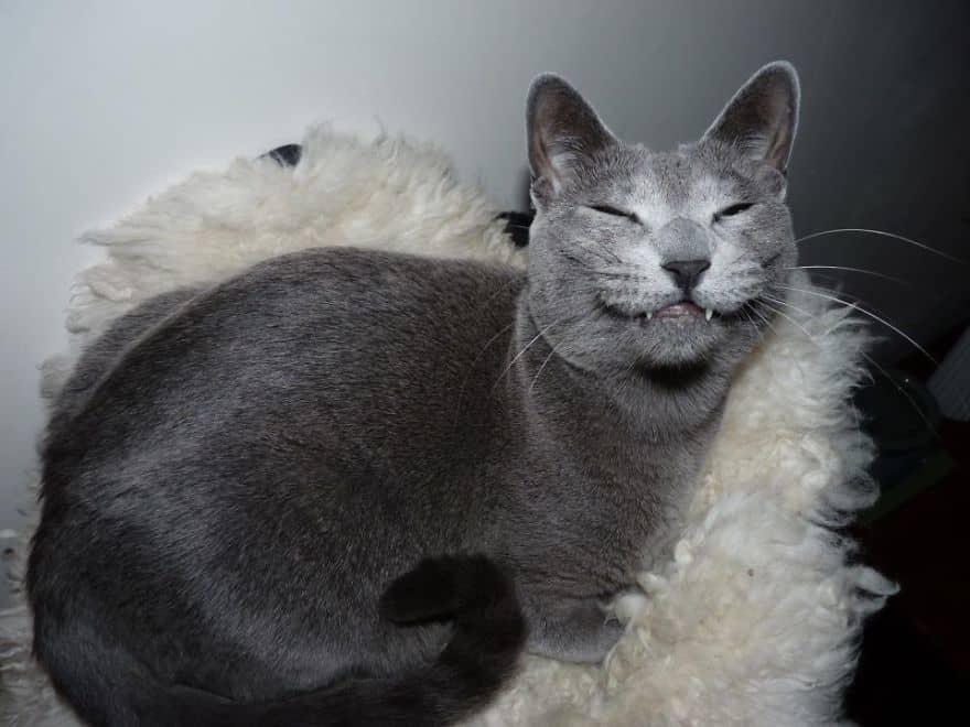 happy-cat-smiling-8__880.jpg