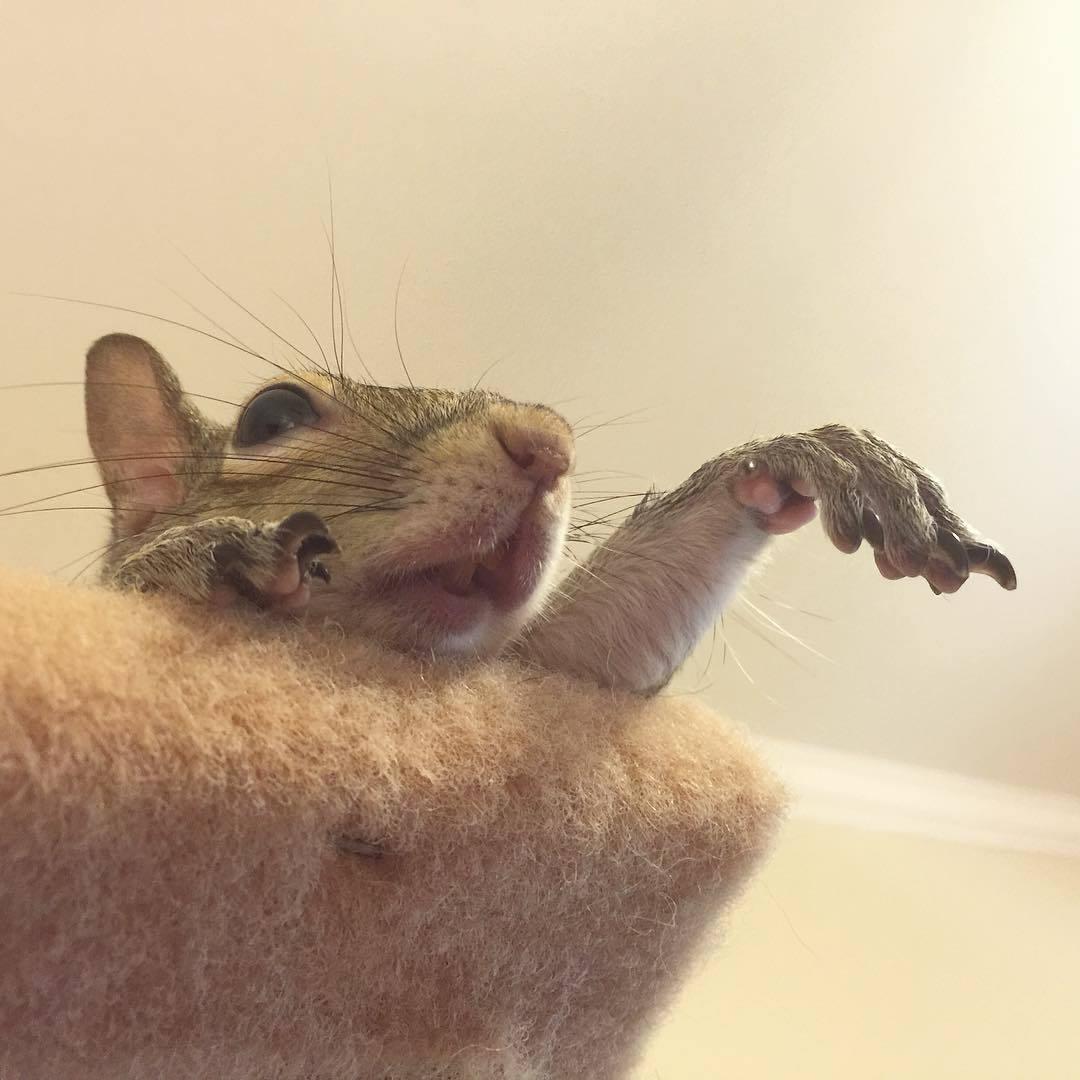 【かわいい動物】保護されたリスちゃんの画像が最高に萌える。【英語ではSquirrel】10.jpg