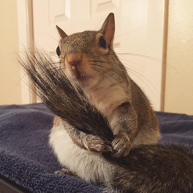 【かわいい動物】保護されたリスちゃんの画像が最高に萌える。【英語ではSquirrel】11.jpg