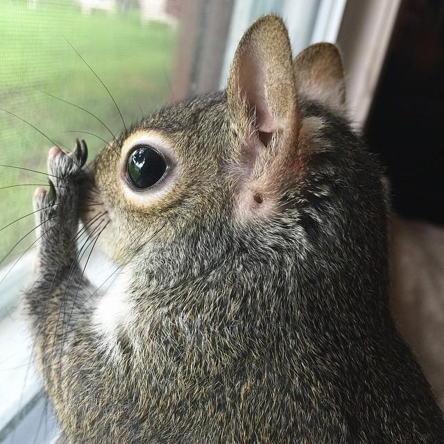 【かわいい動物】保護されたリスちゃんの画像が最高に萌える。【英語ではSquirrel】12.jpg