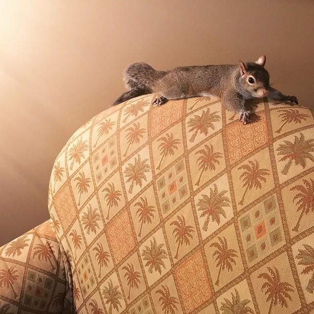 【かわいい動物】保護されたリスちゃんの画像が最高に萌える。【英語ではSquirrel】14.jpg
