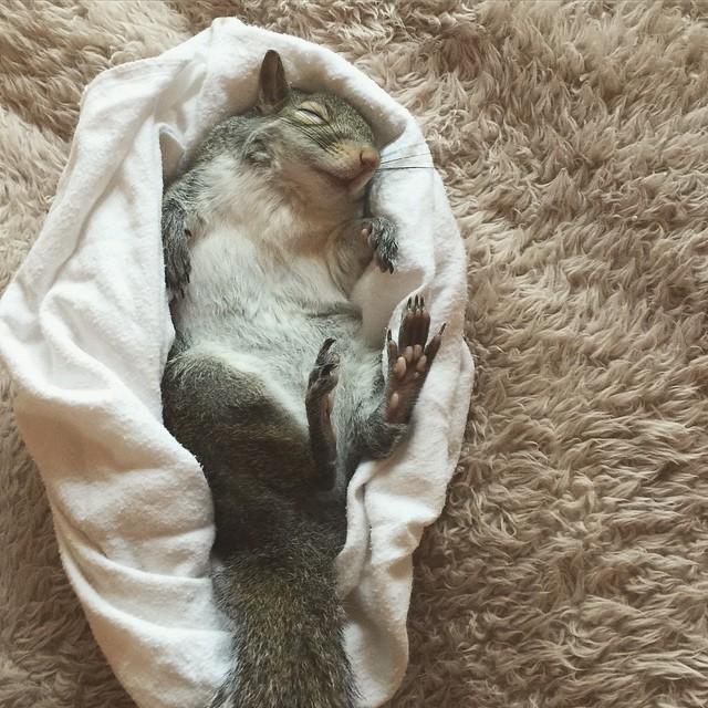 【かわいい動物】保護されたリスちゃんの画像が最高に萌える。【英語ではSquirrel】18.jpg