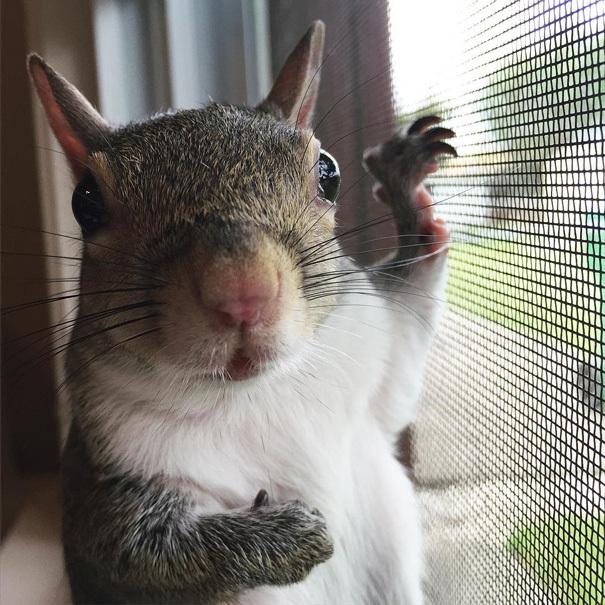 【かわいい動物】保護されたリスちゃんの画像が最高に萌える。【英語ではSquirrel】2.jpg