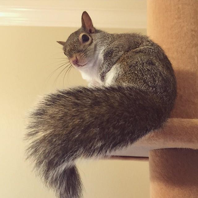 【かわいい動物】保護されたリスちゃんの画像が最高に萌える。【英語ではSquirrel】20.jpg