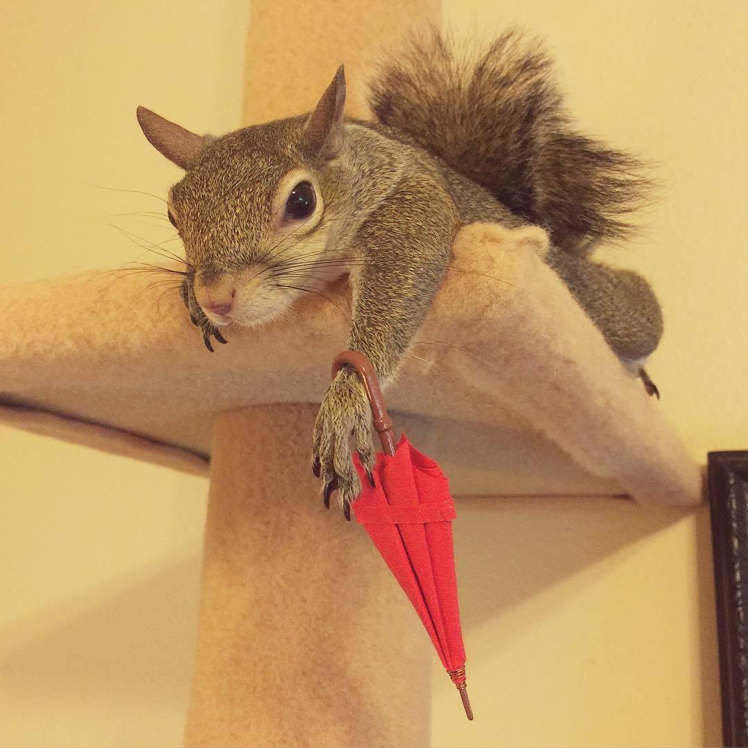 【かわいい動物】保護されたリスちゃんの画像が最高に萌える。【英語ではSquirrel】3.jpg
