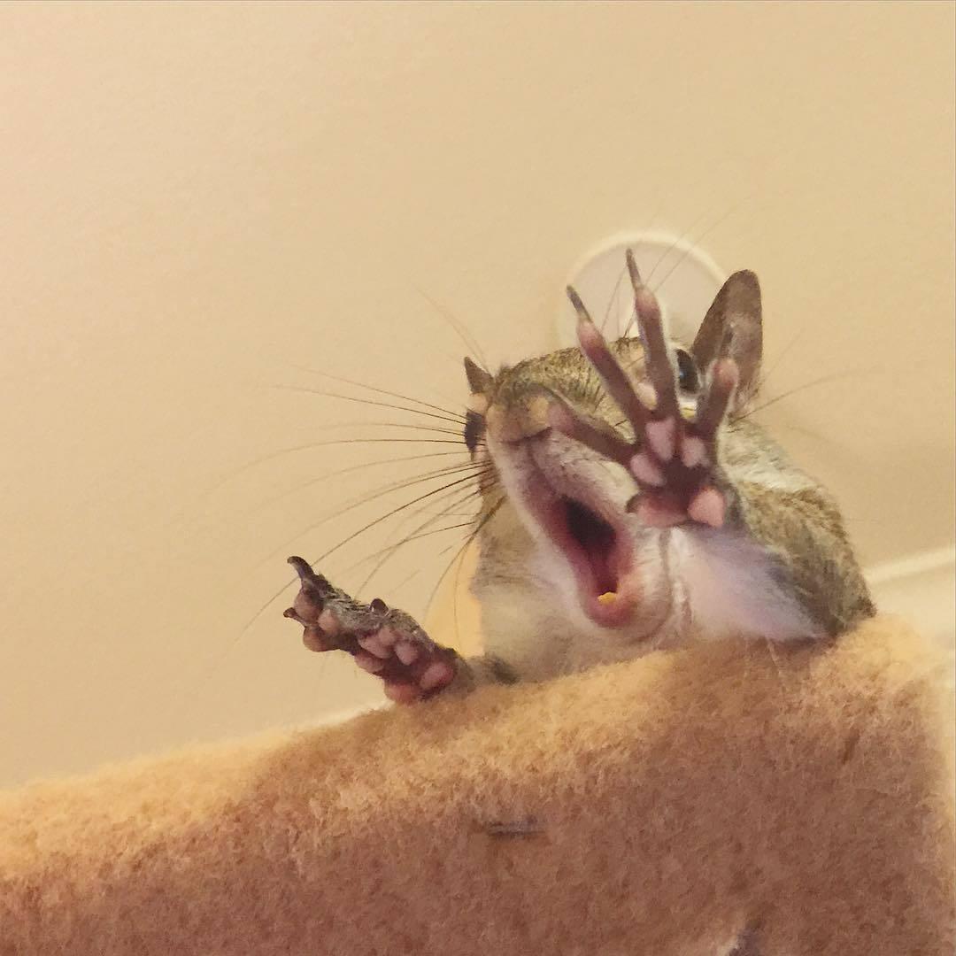 【かわいい動物】保護されたリスちゃんの画像が最高に萌える。【英語ではSquirrel】8.jpg