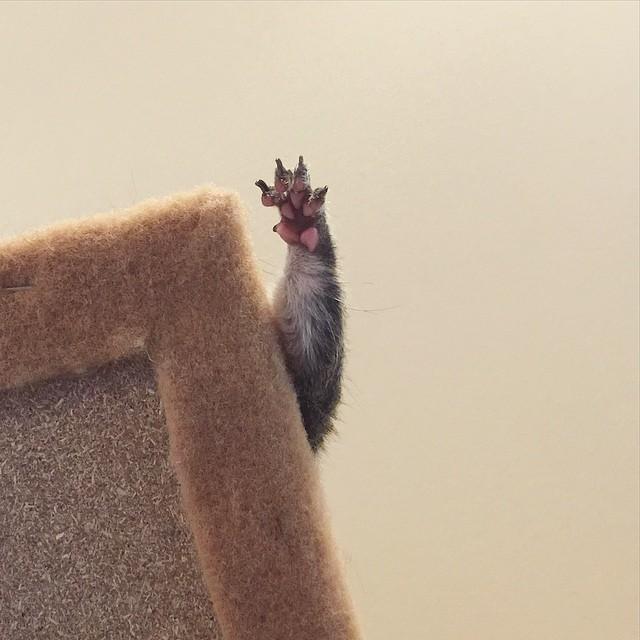 【かわいい動物】保護されたリスちゃんの画像が最高に萌える。【英語ではSquirrel】9.jpg