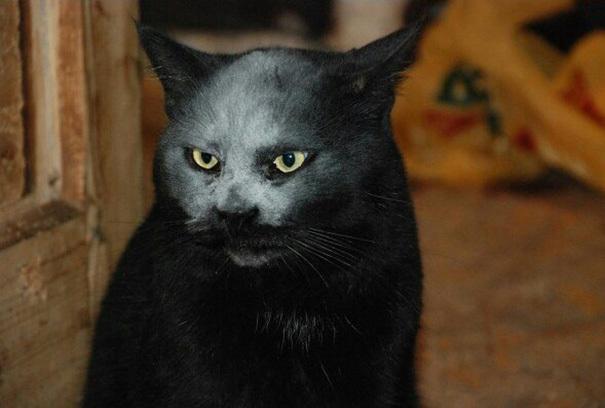 【デビルキャット】黒猫&小麦粉=デビルになる事が判明。【画像】3.jpg