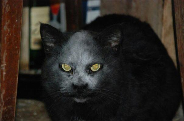 【デビルキャット】黒猫&小麦粉=デビルになる事が判明。【画像】4.jpg