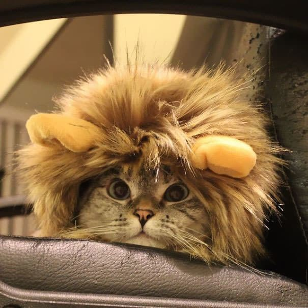 Instagrams-most-famous-cat-Nala15__605.jpg