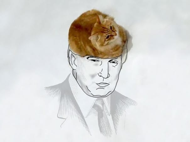 funny-doodles-on-lovely-cat-photo-donald-trump__605