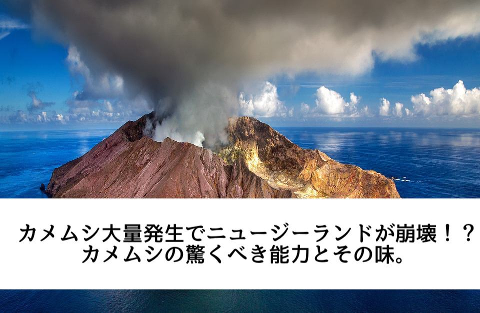 カメムシ大量発生でニュージーランドが崩壊!?カメムシの驚くべき能力とその味。